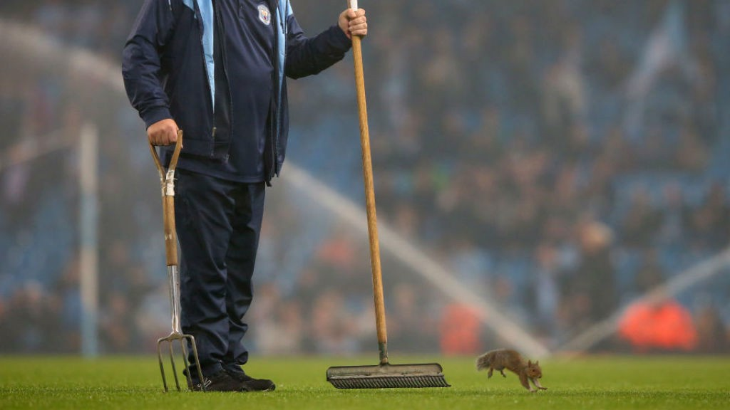 PITCH INVASION: The squirrel takes centre stage at the Etihad